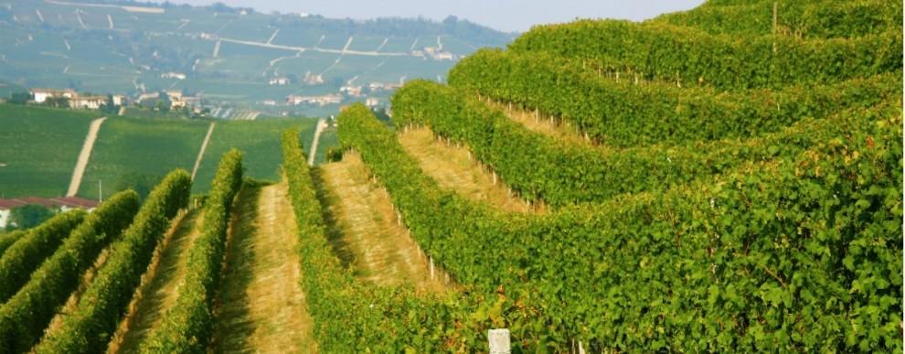 Piemont - Spumante